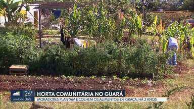 Voluntários plantam e colhem de graça em horta comunitária do Guará - Projeto existe há dois anos e funciona nos fundos da UBS - Unidade Básica de Saúde, na QE 38 do Guará II. Terreno foi cedido pela Administração para a produção dos alimentos, que são colhidos quinzenalmente.