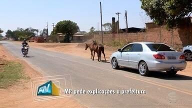 Animais soltos nas ruas geram reclamações da população - Ministério Público cobrou providências em Panorama.
