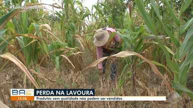 Pequenos agricultores sofrem com os reflexos da seca em Feira de Santana - Eles estão sobrevivendo com o dinheiro de benefícios e programas sociais.