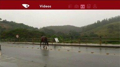 Cavalo solto em pista de Cachoeiro de Itapemirim coloca em risco motoristas, no Sul do ES - Situação foi registrada por moradores.