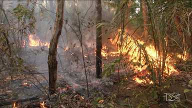 Equipes do IBAMA lutam contra incêndio em reserva indígena no Maranhão - Parte do território Krenyê está em chamas há seis dias. Indígenas acreditam que o incêndio possa ser criminoso.