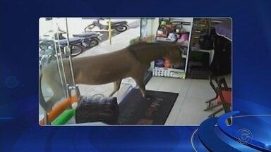 Câmera flagra mula 'passeando' em loja de materiais de construção de Tabapuã - Uma mula foi flagrada passeando em uma loja de materiais de construção de Tabapuã (SP), na tarde desta segunda-feira (27).