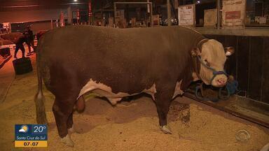 Expointer 2018 reúne até 20 raças de bovinos - Assista ao vídeo.