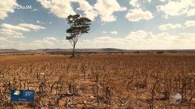JM no Campo: seca atinge as safras de milho e feijão no nordeste do estado - A perda chega a 90% da safra do milho e 100% da safra de feijão em Adustina.