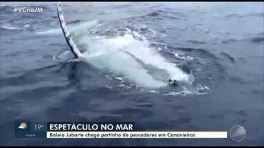 Baleia jubarte é flagrada por pescadores em Canavieiras, no sul da Bahia - Presença do animal deixou os dois homens surpresos.