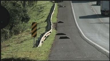 Capivaras morrem atropeladas em rodovia de Itapeva - Acidente ocorreu na manhã desta sexta-feira (7), na Rodovia Francisco Alves Negrão. Apesar dos danos no veículo, o motorista não teve ferimentos.