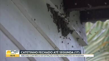 Catetinho vai ficar fechado para retirada de abelhas - O museu vai ficar fechado até a próxima segunda-feira (17). As abelhas com risco de extinção estão nas paredes de madeira.
