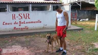 4º GBM ganha cães treinados para ajudar em operações de salvamento na região - Ao todo são quatro cães que ajudarão as equipes de militares do 4º Grupamento de Bombeiros Militar.