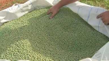 Produtores estão pagando mais por fertilizantes e sementes para nova safra de soja - Brasil teve produção recorde de soja.