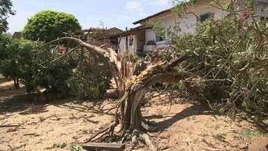 Chuva de 36 milímetros causa estragos em Capela do Alto - Nas últimas 48 horas choveu 36 milímetros em Capela do Alto (SP) e, conforme os meteorologistas, o número é um acúmulo considerável de chuva. A tempestade causou diversos estragos na cidade, como a queda de árvores, postes e parte do telhado de uma creche. A previsão é que a estrutura seja consertada até quinta-feira (20).