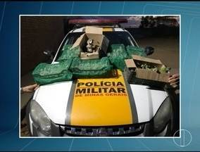 Dois homens são presos transportando 187 aves silvestres em um carro na MG-122 - Aves estavam em 12 caixas no porta-malas do veículo; motorista afirmou que foi contratado para levar os pássaros de Pindaí (BA) até Montes Claros.