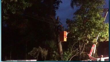 Árvore cai e interdita trecho na perimetral no sentido bairro Centro, na altura do Rodeio - Os moradores do entorno ficaram sem energia elétrica.