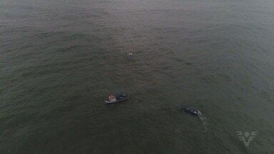 Embarcação de 10 metros afunda em Bertioga - Marinha investiga o que aconteceu. Ninguém ficou ferido.
