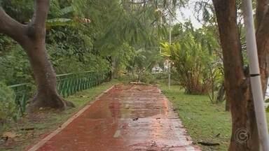 Temporal causa estragos em cidades da região de Sorocaba - Árvores caídas e folhas espalhadas nos quintais de casa. Esse foi o cenário que predominou em cidades da região de Sorocaba (SP) na manhã desta quinta-feira (20). Um temporal atingiu os municípios na noite de quarta-feira (19).