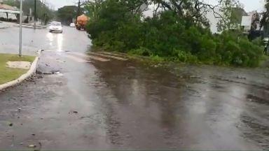 Chuva forte deixa estragos em Cafelândia - Segundo a prefeitura, pelo menos 10 árvores caíram com a força do vento.