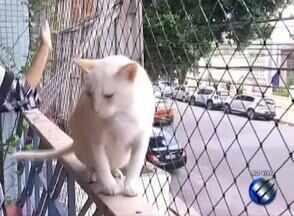 Quadro 'Dica Animal' fala sobre tratamento da síndrome da imunodeficiência em gatos - Veterinário tira dúvidas sobre assunto.