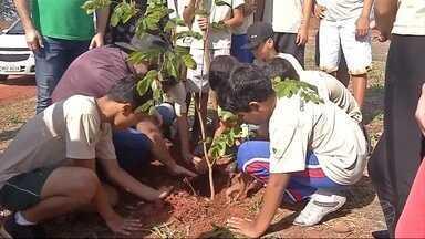 Estudantes plantam mudas em avenida de Três Lagoas - Cidade tem desafio de arborizar seus novos bairros.