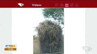 Vídeo flagra caminhonete com excesso de carga em estrada no Sul do ES - Flagrante foi enviado à TV Gazeta pelo aplicativo.