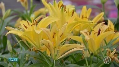 Mexer com plantas faz bem para o meio ambiente e para a alma - Jardinagem é terapia para muita gente.