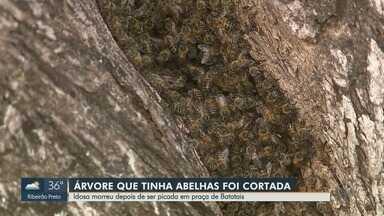 Após ataque de abelhas, árvore e colmeia são retirados de praça em Batatais - Idosa de 80 anos morreu após ser picada enquanto passeava no local.