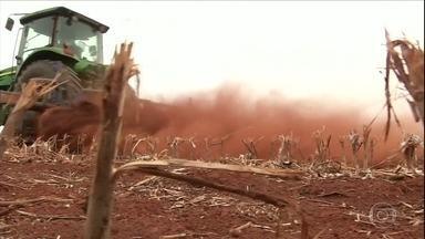 Veja notícias que foram destaque no campo essa semana - Receita Federal recebe recorde de declarações do ITR; começa a colheita do abacaxi em PR; agricultores de MS iniciam plantio da soja; granizo atinge lavouras de tabaco no RS.