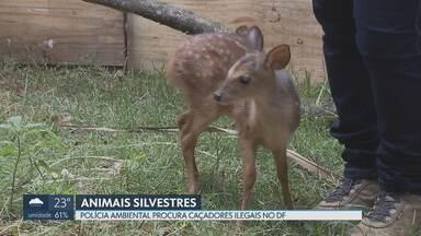 Policiais ambientais à procura de caçadores ilegais no DF - Só esse ano, a polícia Ambiental já fez 3 mil apreensões e 2 mil resgates de animais silvestres em áreas de cerrado. Muitos foram vítimas de caçadores ilegais.