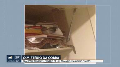 O mistério da cobra em águas Claras - Uma cobra de tamanho médio apareceu dentro de um armário da estante do quarto de um apartamento, no 23º andar. Quando a polícia ambiental chegou para fazer a captura, a cobra havia sumido.