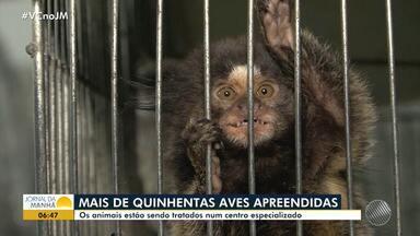 Centro de Triagem de Conquista trata mais de 500 animais apreendidos em Feira - Conheça o trabalho do centro que cuida do resgate dos animais que sofreram de maus-tratos e violência.