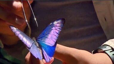 Equipe de pesquisadores caça borboletas e mariposas para repor acervo do Museu Nacional - Profissão Repórter acompanha o dia a dia dos cientistas que lutam para continuar na área da pesquisa.
