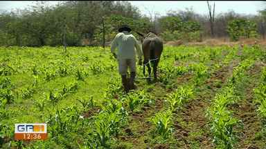 Agricultores da região do Pontal conseguem plantar e alimentar animais mesmo com estiagem - Eles enfrentam a situação no campo de forma mais otimista.
