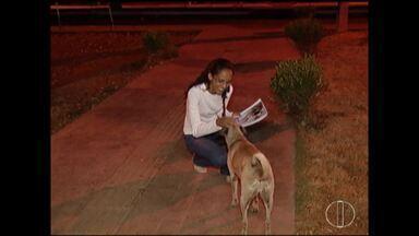 É o Bicho: castração pode ajudar no número de animais soltos nas ruas - Processo pode ajudar a diminuir riscos à saúde.