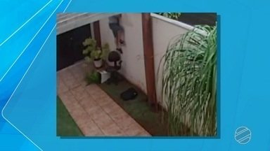 Câmeras flagram ladrões em residência de Campo Grande - Eles entraram na casa enquanto os moradores tinham saído para almoçar com amigos.