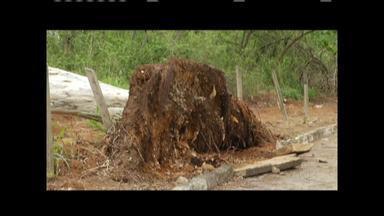 Chuva e ventos fortes atingiram cidades do Vale do Aço nesse fim de semana - Árvores caíram em vários pontos.