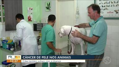 Veterinário fala sobre o câncer em animais - Entre os tumores, o mais frequente no Brasil é o mamário, seguido pelo linfoma e de pele.