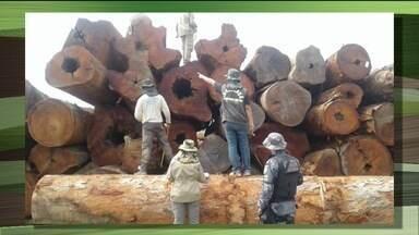105 madeireiras são embargadas em 2018 em MT - Os fiscais em uma única madeireira aprenderam toras que somam quase 3.000 metros cúbicos de madeira. As operações da Sema e Ibama visam zerar os desmatamentos irregulares até 2020.