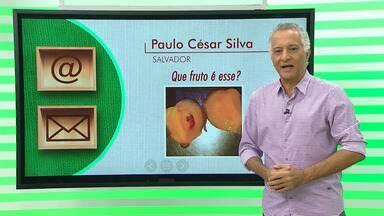 Especialista tira dúvidas sobre fruta desconhecida em Entre Rios - Outro fato curioso é uma vaca que deu a luz a um bezerro de duas cabeças.