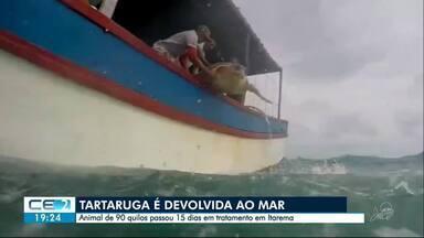 Tartaruga que havia sido resgatada no litoral cearense é devolvida ao mar - Confira mais notícias em g1.globo.com/ce