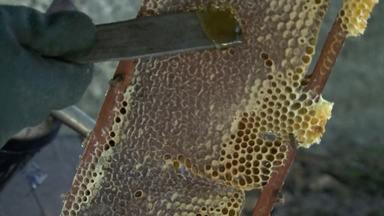 Apicultores estão otimistas com a produção de mel na primavera em Feira de Santana - As condições climáticas no local permitiu que as abelhas produzissem mais mel. Já na região norte, os agrotóxicos estão prejudicando a saúde dos insetos.