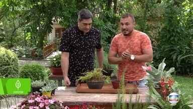 Conheça plantas fáceis de serem cultivadas dentro de casa - Murilo Soares dá dicas incríveis para seu jardim ficar sempre bonito