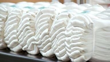 """Criação de bicho da seda garante sustento de pequenos produtores no interior de SP - Você talvez já tenha ouvido a expressão """"come como uma lagarta"""". Para entender melhor o que isso quer dizer, basta olhar uma criação de bicho da seda. O inseto se alimenta o dia todo. Só assim para se desenvolver como deve."""