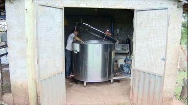 Preço pago ao produtor de leite cai pelo segundo mês em Minas Gerais - O preço médio, em outubro, foi de R$1,46 segundo o Cepea. Os criadores dizem que o valor é baixo para cobrir os custos de produção e dar lucro. Alguns, dependem de outras atividades na propriedade para fechar as contas.