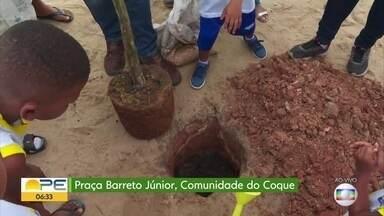 Engenheira florestal fala sobre benefícios da presença das árvores nas cidades - Crianças da Comunidade do Coque realizam o plantio de árvores na Praça Barreto Júnior.
