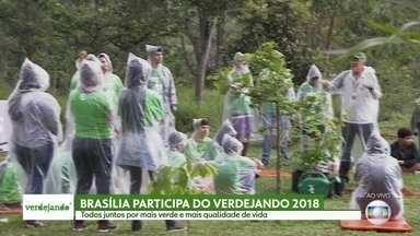 Verdejando 2018 se espalha pelo Brasil - Brasília e Recife vão participar do projeto este ano.