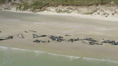 Mais de 150 baleias encalharam nas praias da Nova Zelândia - As autoridades dizem que a média por ano é de 85 encalhamentos, e que isso pode ter sido causado por predadores ou condições climáticas.