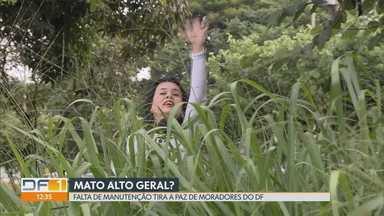 Redação Móvel mostra o descaso na poda de mato - Telespectadores e moradores reclamaram de mato alto em todo o DF. GDF promete iniciar os trabalhos nesta terça-feira (4).