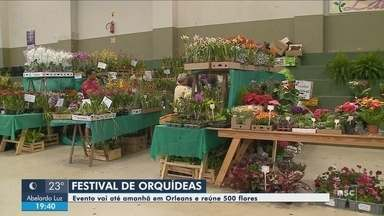 Orleans recebe Festival de Orquídeas neste fim de semana - Orleans recebe Festival de Orquídeas neste fim de semana