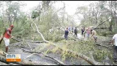 Mais de 50 árvores caem por conta da chuva e ventos fortes em Andaraí - Veja os estragos causados pela chuva.