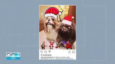 Corrente de solidariedade arrecada ração para animais de um abrigo - A campanha pedia que participantes mandassem fotos de seus pets com tema de Natal.