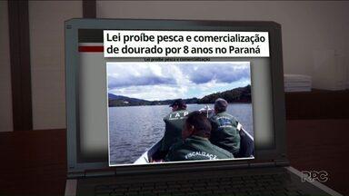 Pesca do Dourado é proibida no Paraná - A pesca e comercialização do dourado está proibida por 8 anos no Paraná