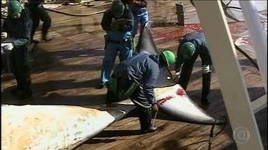 Japão anuncia retomada da caçada comercial de baleias - Caça comercial vai ser retomada a partir de julho de 2019. Decisão é criticada pela comunidade internacional.